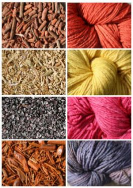Photographs of natural dyestuffs (left top down) madder root, weld chpped stems, cochineal, logwood chips, and (right) dyed woolen hanks
