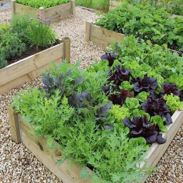 vegetable garden plans wooden raised beds gravel paths  patio garden ideas