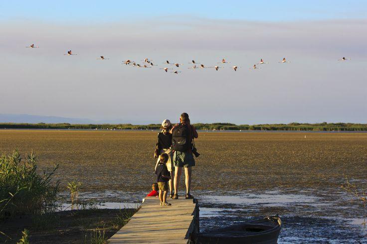 Observació d'aus al Parc Natural del Delta de l'Ebre. Llacuna del Garxal. Copyright Patronat de Turisme de la Diputació de Tarragona #Sternalia