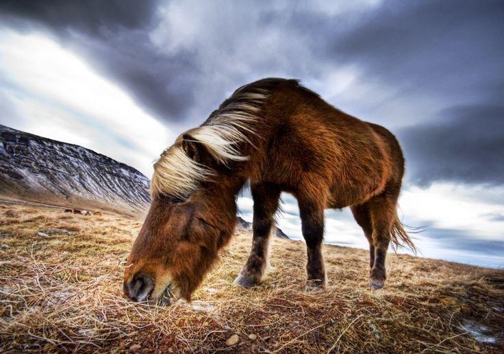 Google képkeresési találat: http://i.images.cdn.fotopedia.com/stuckincustoms-4e868e714090c12e860174c2127042b5-image/Photography_Techniques/Image_editing/High_dynamic_range_imaging/Horses_in_the_Fjord.jpg
