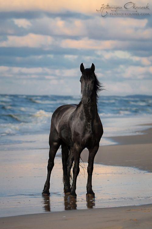 109 besten pferde im wasser bilder auf pinterest sch246ne