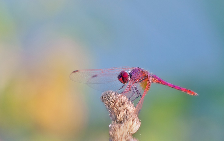 The colors on this dragonfly are so vivid