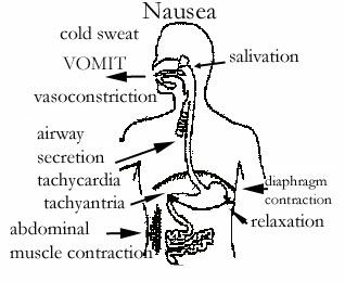Gamma-Linolenic Benefits, Sources, Dosage And Deficiency