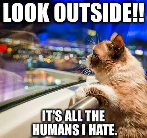 Lol grumpy cat - What more to say other than we just LOVE cool stuff! Check out our store for even more COOL stuff! <3 www.myhappyfamilystore.com