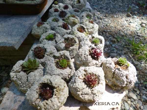 Hypertufa Gardening - rugged and rustic planters and garden art