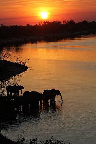 "Africa | ""Chobe riverfront"" Chobe National Park, North West Botswana"