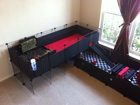 Cool guinea pig cage pampered pets pinterest cavy for How to make a guinea pig cage