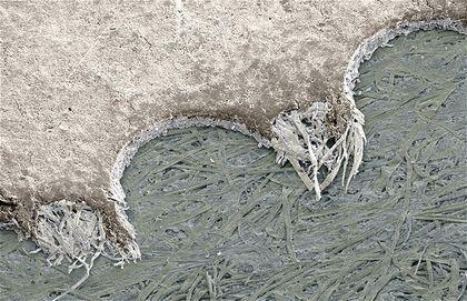 25 Imagenes Asombrosas Vistas por Microscopio Electronico - Taringa!