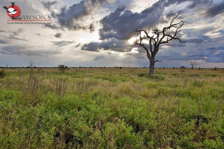 Late summer near Satara, Kruger.