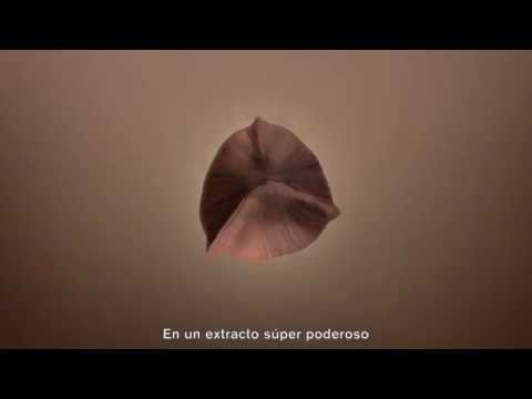 Revitalizing Supreme + con extracto de Moringa. - YouTube