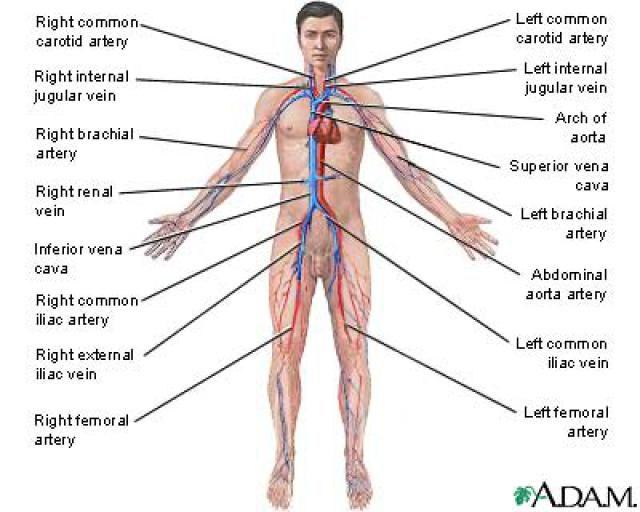 174 Best Avascular Necrosis Osteochondritis Dissecans