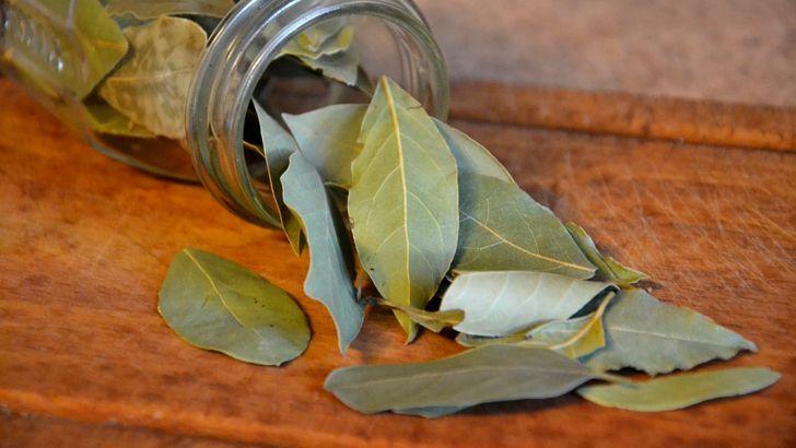 Bobkový list – vznešené koření