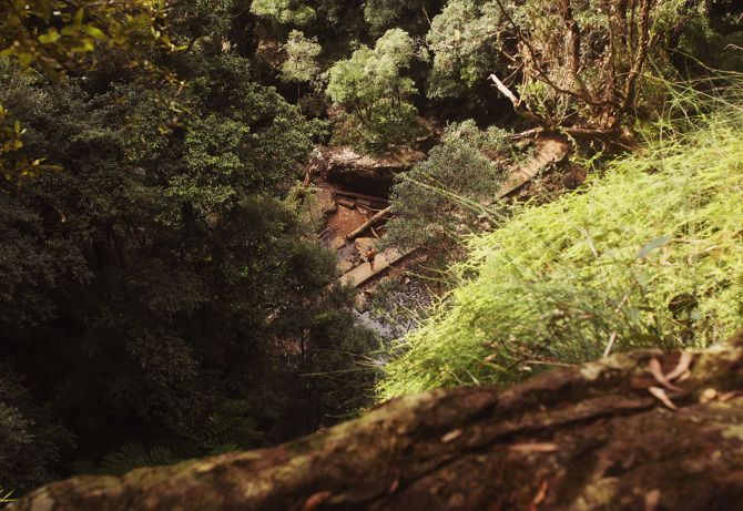 1.5 hours south of Brisbane, is Springbrook National Park.  You can walk the downhill path through the trees and mountains to find a towering waterfall.