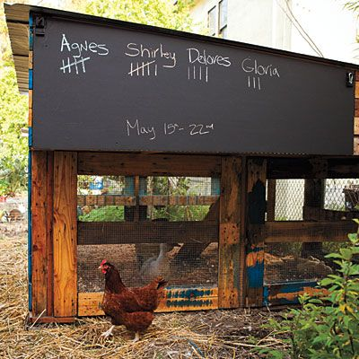 Pallet coop -  The coop even has a fun chalkboard panel to tally up weekly egg counts.