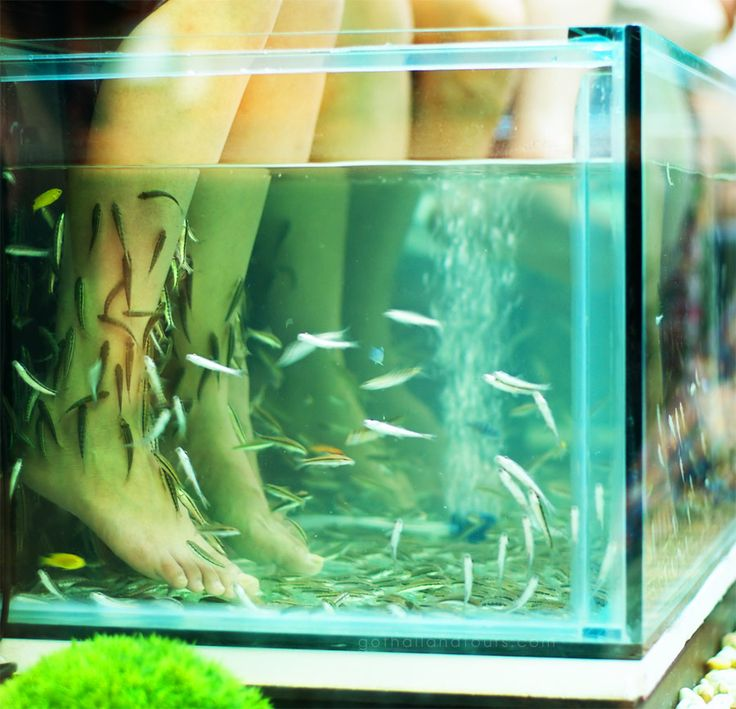 146 best we love thailand images on pinterest asia for Travel fish tank