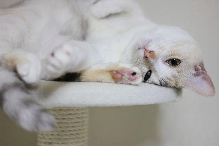 キャットタワー はどう選べばいい 猫はデザイン性が高いものが嫌い Sumai 日刊住まい 猫 キャットタワー 猫 ブログ