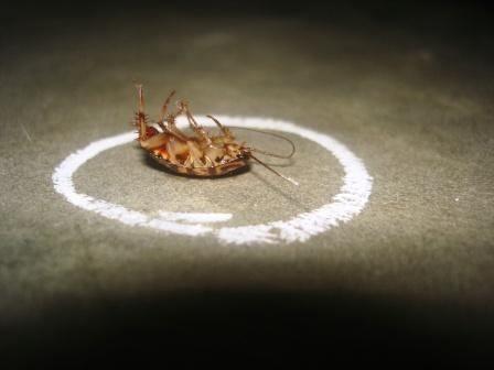 Cómo utilizar y dónde comprar ácido bórico para combatir cucarachas y hormigas en tu hogar
