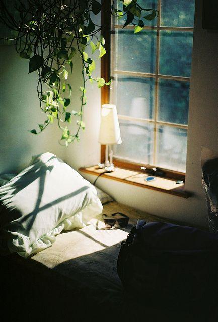 Morning Light - Bedside Window - Hanging Plant