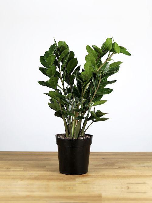 24 Belles Plantes Qui Poussent Même à l'Ombre ! en 2020 ...