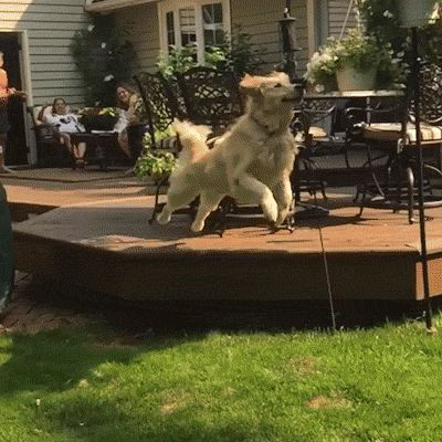 New trending GIF on Giphy. funny dog cute fail lol aww afv whoops bonk. Follow Me CooliPhone6Case on Twitter Facebook Google Instagram LinkedIn Blogger Tumblr Youtube