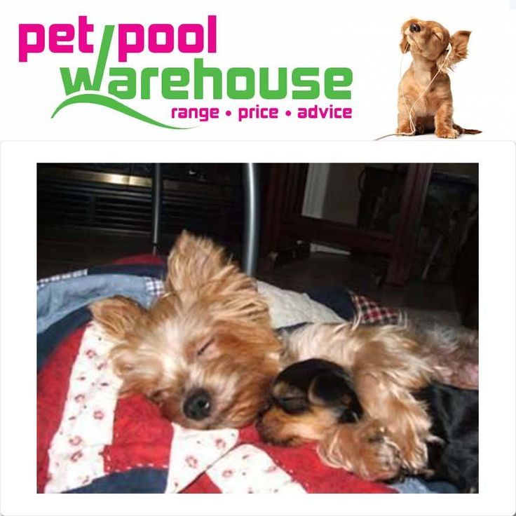 Sunday means time to #cuddle with your loved one. Pet Pool Warehouse Knysna wishes everyone a safe and warm #Sunday from this rain.