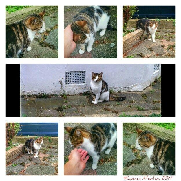Affectionate cat