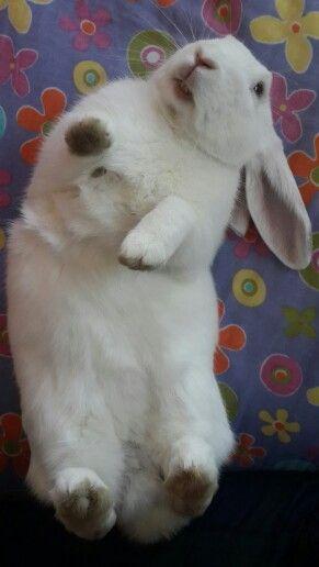 Bunny Relax