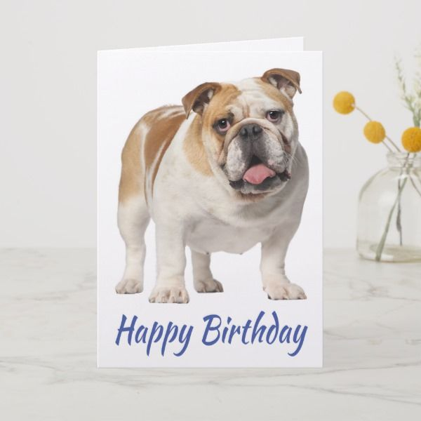 Happy Birthday English Bulldog Puppy Dog Card Zazzle Com