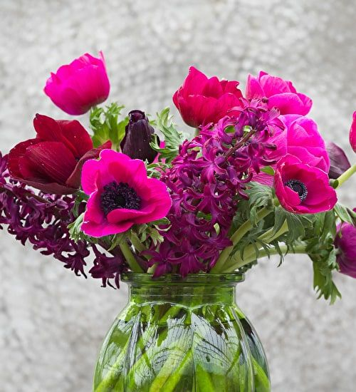 Anemone coronaria Jerusalem Pink, you can force these for flowers all spring when put immediately into pots or greenhouse borders. Pick yours today.