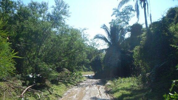 Dirt road in jungle