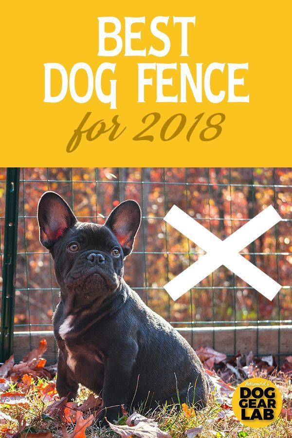 Best Wireless Dog Fence for 2018 | Dog Obedience Training