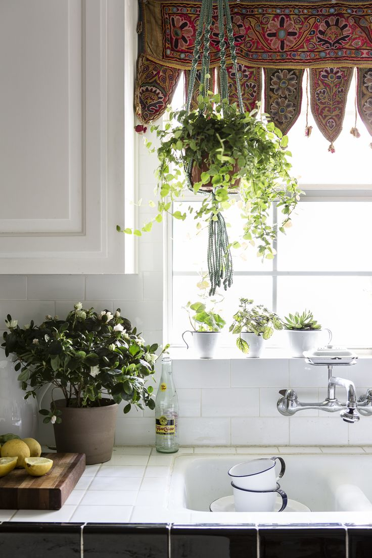 15 best plants indoor images on Pinterest | Sweet home, Home ideas ...