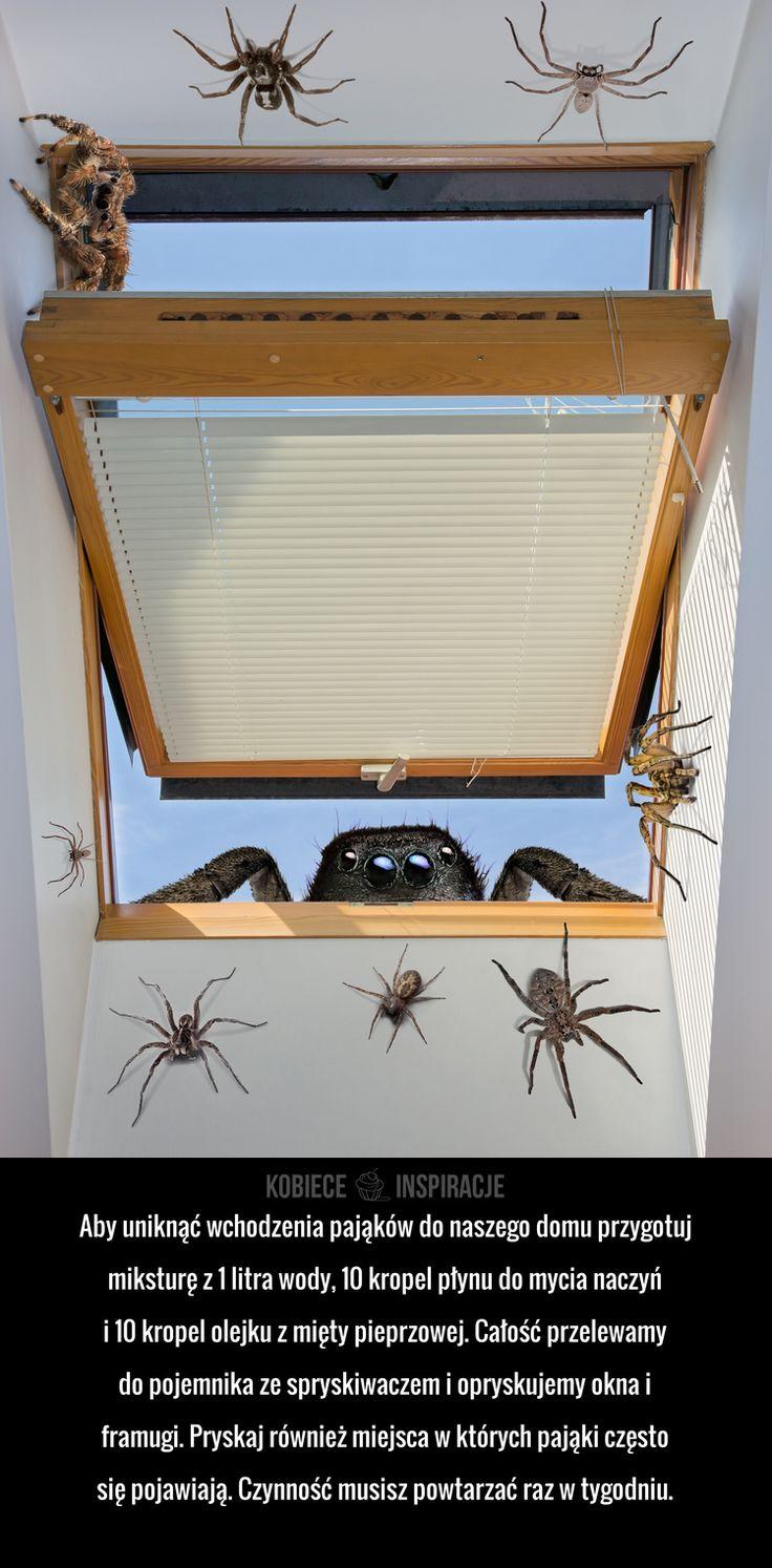 Aby uniknąć wchodzenia pająków do naszego domu przygotuj miksturę z 1 litra wody, 10 kropel płynu do mycia naczyń i ...