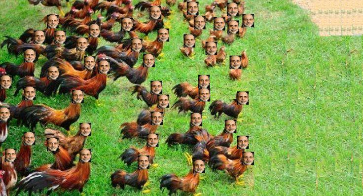 Bernanke headless chickens