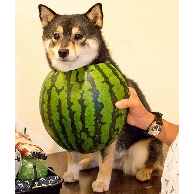 Watermelon dress👗🍉 Not exactly😅 @acoshiba 流行りのスイカドレスを披露してくれたアコちゃん😊自信満々のなか言いづらいんだけど、ちょっと違うよ〜😅2枚目は