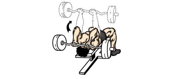 """Los tríceps son parte de un grupo muscular llamado """"Extensor"""". Esto significa que, cuando se doblan los codos y cuando se extienden lo..."""