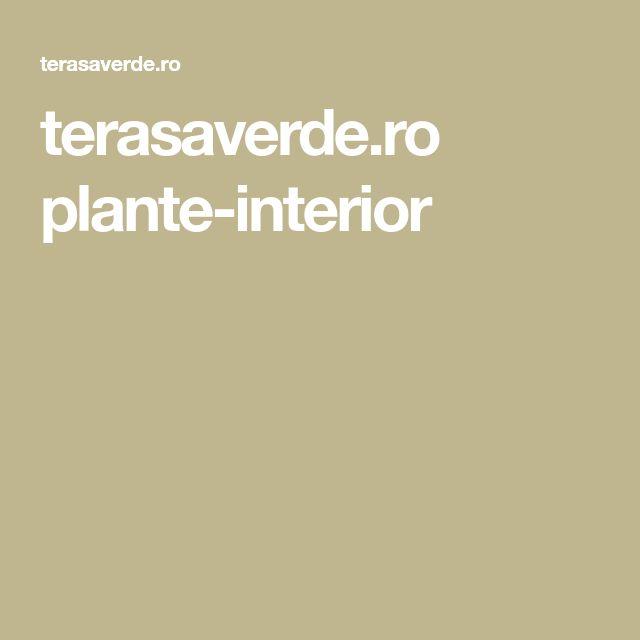 terasaverde.ro plante-interior