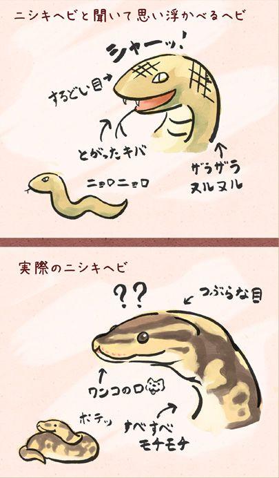 """gakujin:  (via 【拡散】大勢の人にこの事実を知って欲しい【ニシキヘビ】… on Twitpic)   """