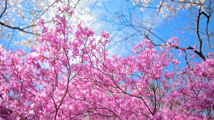 papeis de parede | Papel de Parede Grátis para PC HD: Papel de Parede Primavera Flores ...