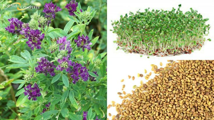 Forage Complete has paired an unmatched portfolio of high quality alfalfa seed, cover crop seed with knowledgeable and experienced sales and support staff. We distribute premium seed and related products through dealers across the Washington, Oregon, Idaho, Utah, and Nevada.