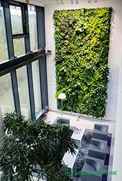 Green Fortune plantwall / vertical garden in office entrance / reception area. | Grüne Wand | Groene wand | Plantwall, Kasviseinä, Viherseinä, Green Fortune, Outotec, Finland