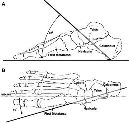 Znalezione obrazy dla zapytania tibiotalar joint biomechanics
