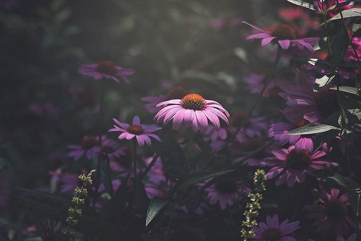 Красивые фотографии цветов Лизы Брианд. Обсуждение на ...