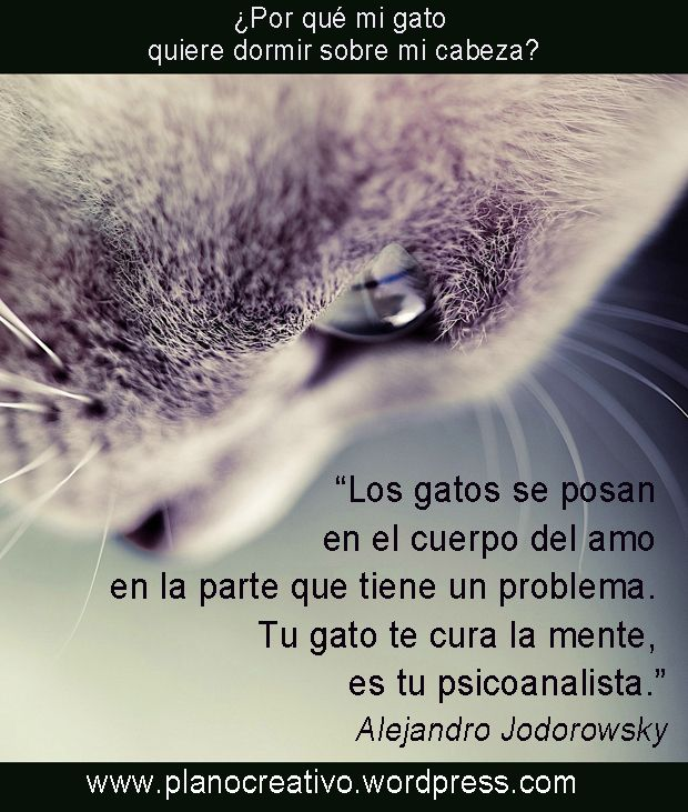 #Jodorowsky #gatos #mascotas