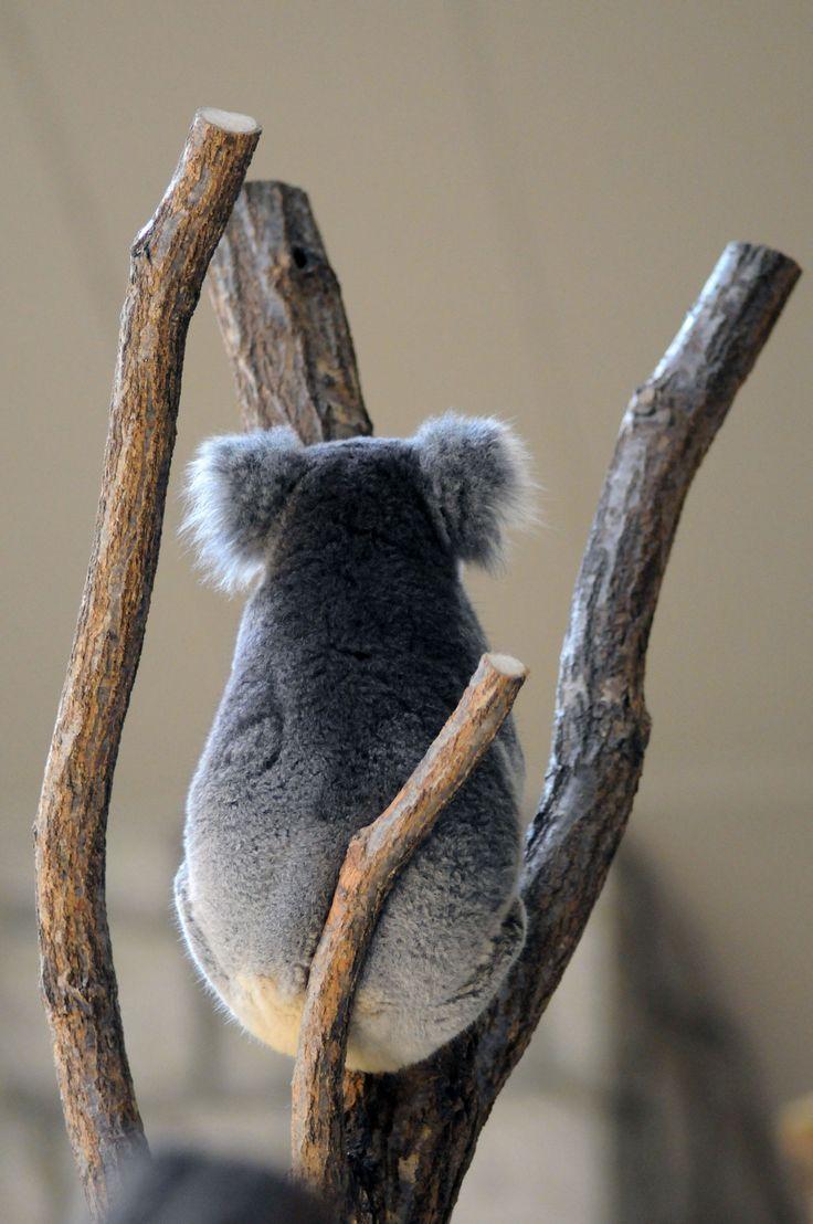 yatzer:  photo © Bong Grit,@ Higashiyama Zoo and Botanical Gardens, Chikusa-ku, Nagoya (名古屋市千種区 東山動植物園)