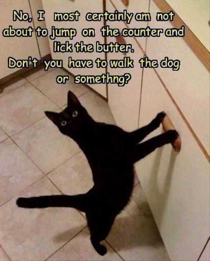 My cat was black, and she loved to lick the butter. If I didn't already know this wasn't our kitchen, I'd wonder if I made this meme in my sleep!