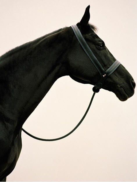 paddyandpia:    black beauty