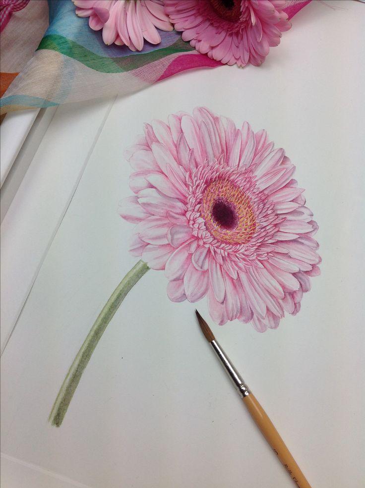 цветы герберы рисунки карандашом подгоняем календарную сетку