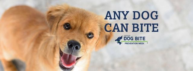 Animals Unfolded: Dog bite prevention is successful when rooted in facts, understanding canine body language