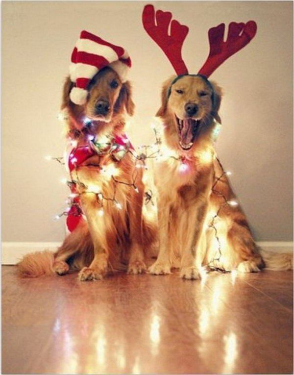 Dogs with Christmas Lights via hative.com